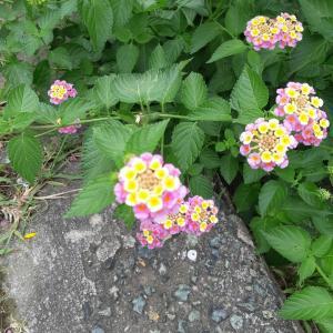 夏の頃の花たち・・・