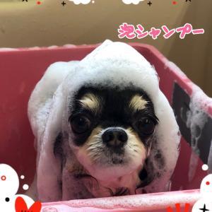 どぉ〜こだ(*^o^*)