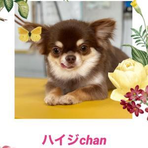 ハイジchan(*^^*)