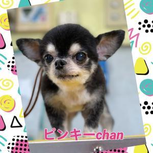 ピンキーchan(〃ω〃)