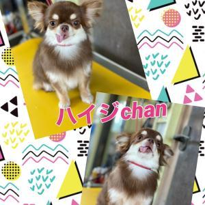 ハイジchan(^o^)