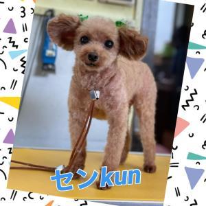 センkun(*^ω^*)