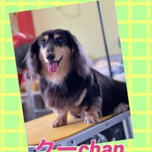 クーchan(o^^o)