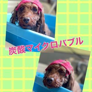 ショコラchan♡大吉kun(^o^)