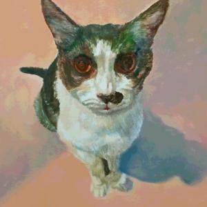 八割れ猫 ロビンちゃんの肖像画 下描き~