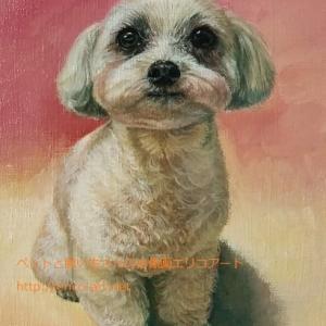 マルチーズ・シーズーのウリちゃんの肖像画