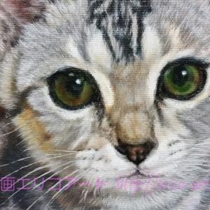 アメリカンショートヘアー メロディちゃんの肖像画