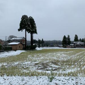 初雪 ❣️