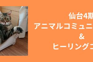 仙台でアニマルコミュニケーションを学びませんか