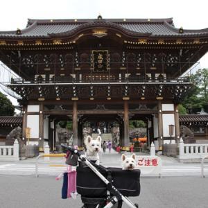 その1 成田山新勝寺に行ってきました