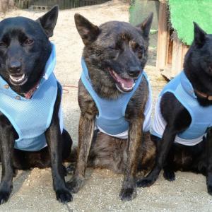 猛暑対策用犬服