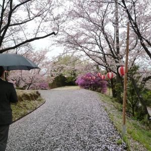 桜の・・・