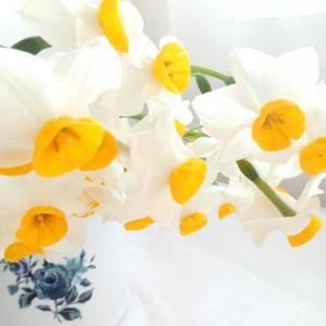 庭の水仙をすべて切り花にしてざっくりと生ける(;^_^A香りいっぱい