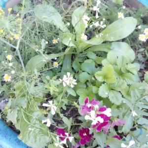 定年後?家庭菜園をしたい 庭があっても土地を借りることになる(;'∀')シンプルに