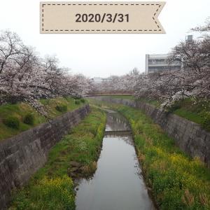 『開花から10日目』