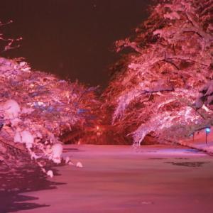 冬に咲くさくらライトアップ:弘前公園*2020.02.08