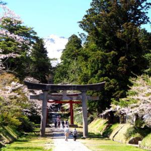 岩木山神社の桜*2020.05.05