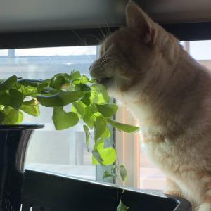 植物な日々