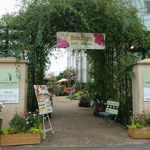 京阪園芸に行ってバラ買った