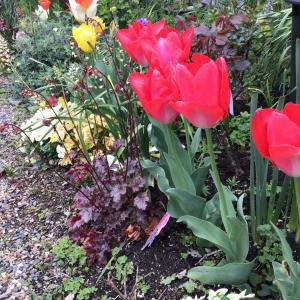 ヒューケラの花と病気ではないF&Gの葉っぱ