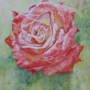 水彩お絵描き思い出めくり№206「薔薇」