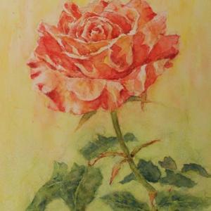 水彩お絵描き思い出めくり№223「ばら習作2」