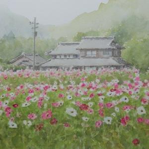 絵「コスモス畑(雨上がりの朝に)」(新作)