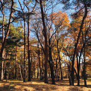 オレンジ色の森の風景
