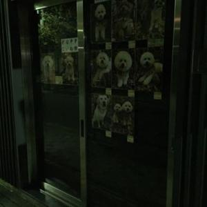 ビションフリーゼ Goro & Maru【2頭共通】カットコース / ナノバブルオゾンシャワー2016.11.12 Saturday