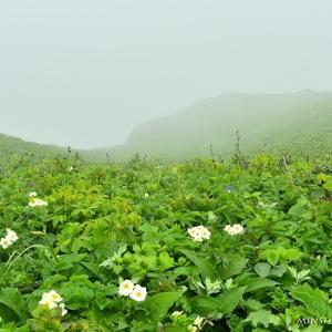 霧の中の桃岩コース