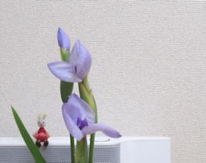 二番花が咲きましたよ