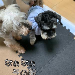 【柚葉ちゃん】柚葉さんの苦情(⌒-⌒; )