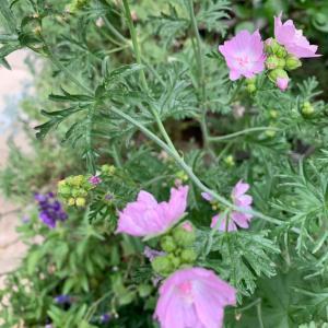 ❤️ハーブの花。