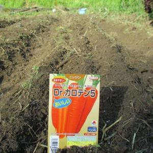 やっと冬野菜の播種