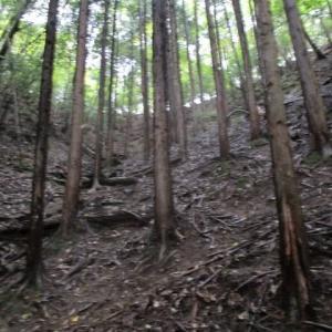 山登りなウィークエンド(土曜日編)