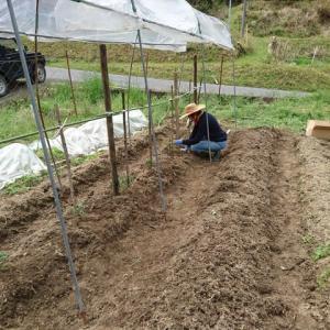 夏野菜植えてみました