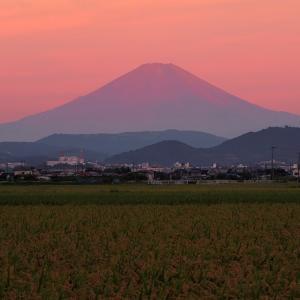 田んぼの用水路で逆さ赤富士を撮れたぜ!の画像