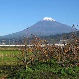 冠雪富士山と紅葉コキアとか柿を撮ったぜ!の画像