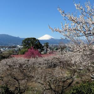 令和2年2月の富士山その2!