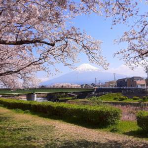 2020年4月の桜と富士山