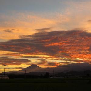 2020年8月の富士山とか向日葵の画像