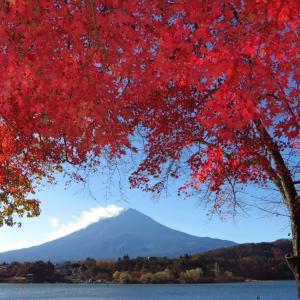河口湖の紅葉と富士山の画像