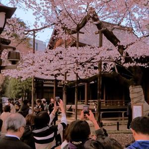 平成最後の桜とか富士山の画像まとめ!