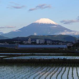 今日のアジサイ富士山だぜ!の画像