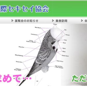 日本国際セキセイ協会(JBA)