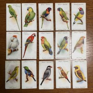 愛鳥カード
