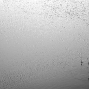No.1185                「春から初夏に・高原の湖面」