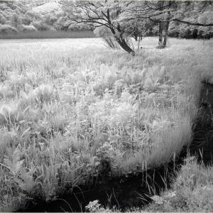 No.1193, 1194        「IR - 初夏の高原散歩 (3)」