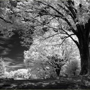 No.1579 - 1583           「新緑の季節」