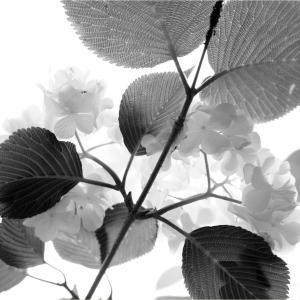 1597 - 1600          「春の庭」
